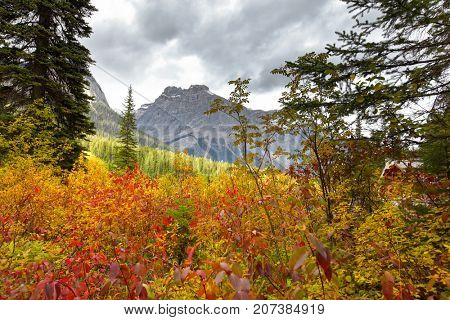 Autumn landscape in Canadian Rocky mountains