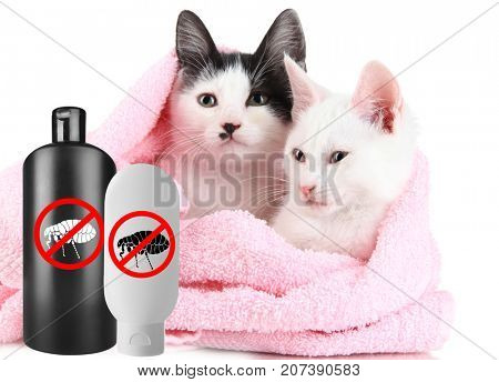 Cats with towel and bottles of flea shampoo on white background