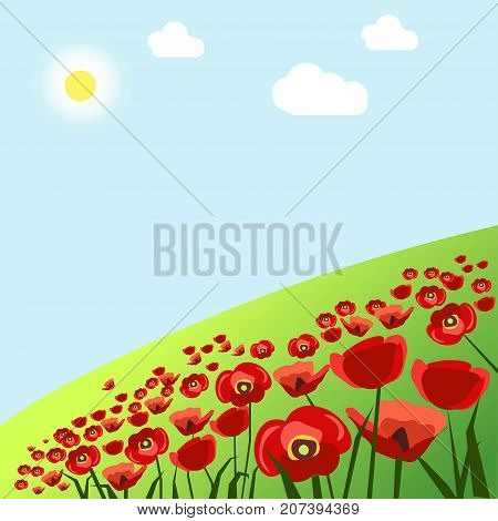 Green fresh grass field with bright red poppies under summer sun in blue sky with fluffy clouds vector illustration. Beautiful flowers that grow out in wild nature. Splendor scene of hot season.
