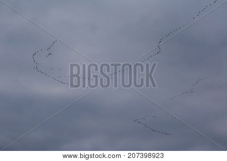 A Beautiful Scenery With A Migratory Birds Flying Above The Sea. Bird Migration In Autumn. Birds Fly