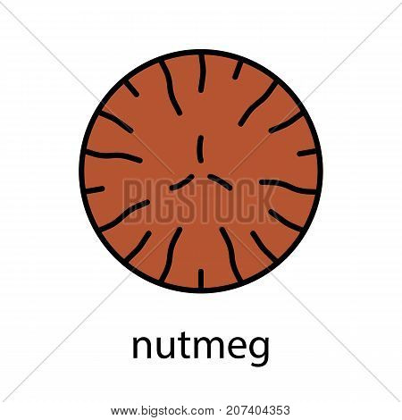 Nutmeg color icon. Mace spice. Isolated vector illustration
