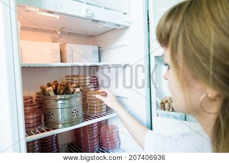 Petri dishes in a incubator thermostat