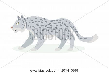 Snow leopard cartoon character. Cute snow leopard flat vector isolated on white background. Asia fauna. Snow leopard icon. Animal illustration for zoo ad, nature concept, children book illustrating