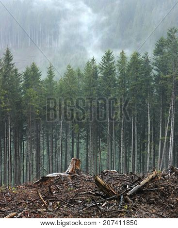 Felling of trees. Ecological problem on the example of deforestation in the Carpathians