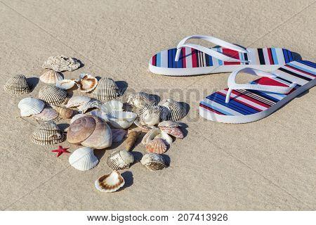 Flip flops and shells on sandy beach