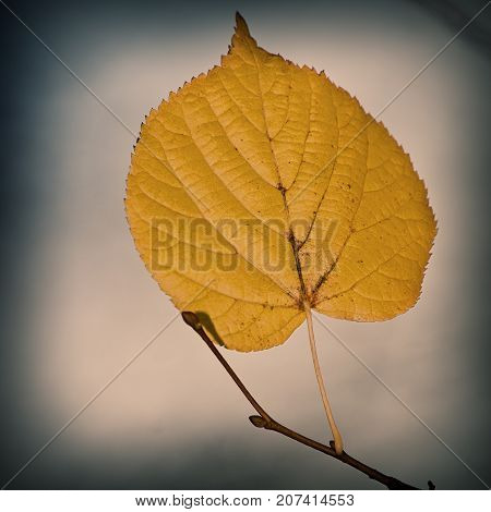 autumnal linden leaf on a background of a cloudy sky