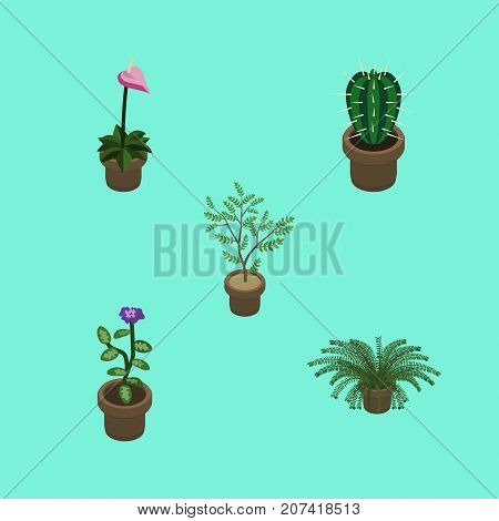 Isometric Houseplant Set Of Peyote, Fern, Flower And Other Vector Objects