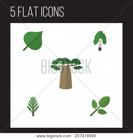 Flat Icon Nature Set Of Foliage, Jungle, Hickory And Other Vector Objects