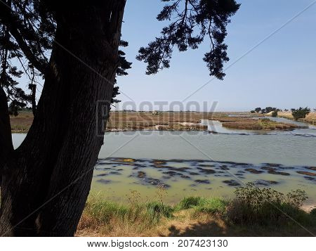 Salt marsh with tree in summer, Noirmoutier Island, France