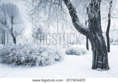 Trees Covered With Snow And Frost In Winter Park