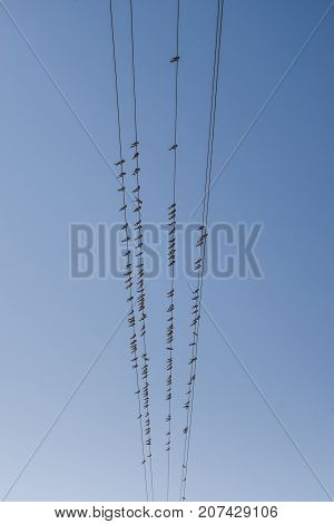 A flock of swallows  sitting on  power line wires on the blue sky background, five horizontal lines.