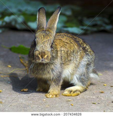 little rabbits . Breeding rabbits concept .Rabbits