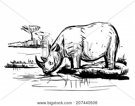 Sketch of rhinoceros. Hand drawn illustration converted to vector