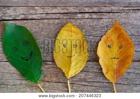Three colorful autumn leaves with different emotions - glad indifferent sad on the wooden background