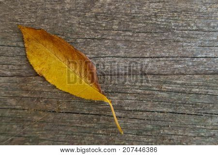 Yellow orange fallen leaf on the old wooden background