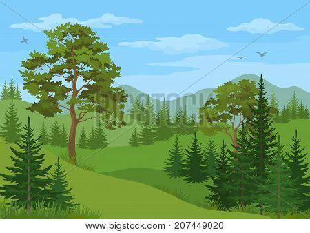 Landscape with Coniferous and Deciduous Trees, Grass, Mountains and Blue Cloudy Sky with Birds. Vector