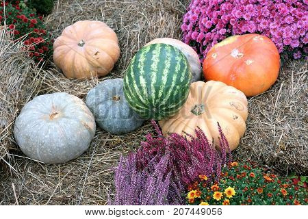 Beautiful still life with ripe vegetables on dry hay closeup in autumn day closeup
