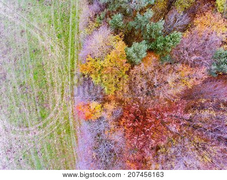 Aerial view of colorful autumn forest with coniferous and deciduous trees.