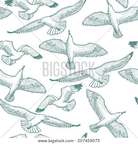Light Seagull Seamless Pattern. Graphic Hand Drawn Flying Seagulls. Vector Background with Birds