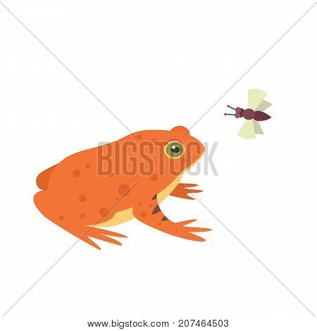 Red Frog Cartoon Vector Illustration isolated. tropical animal.