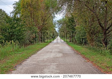 Porto Tolle, Veneto, Italy: long straight road in the Po Delta Park with trees and plants on the sides