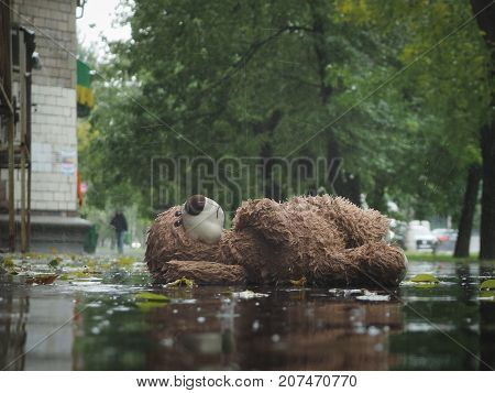 Miserable wet toy bear lying on the pavement in the rain