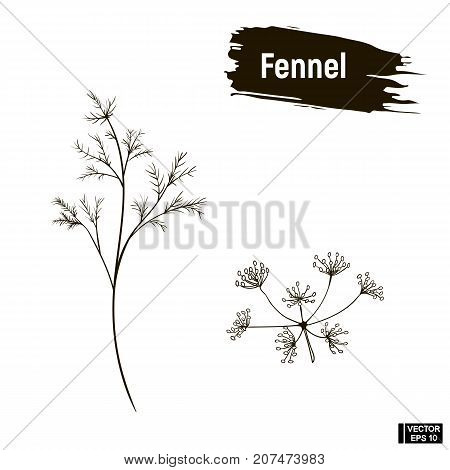 Outline Drawing Of Fennel.