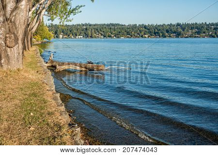 A view of the shoreline at Seward Park in Seattle Washington. Mercer Island can be seen in the distance.