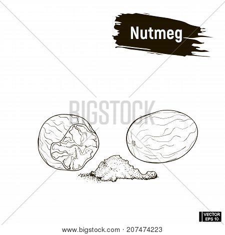 Outline Image Of Nutmeg