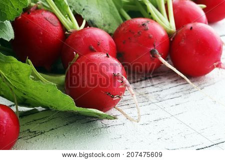 Radish. Red fresh radish. Fresh Vegetable on white table.