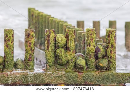 Environmental hazard. Rusty metal beach groyne posts covered in slimy green algae. Gradual decay of coastal features.