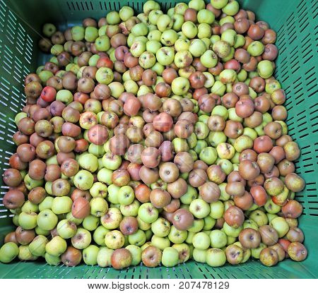 Organic Green Apples In The Box For Sale In The Wholesale Market