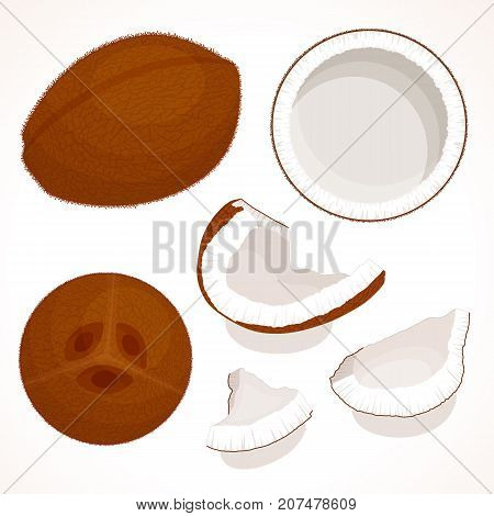 Vector coconut isolated on white background. A whole unpeeled, half and pieces of coconut.