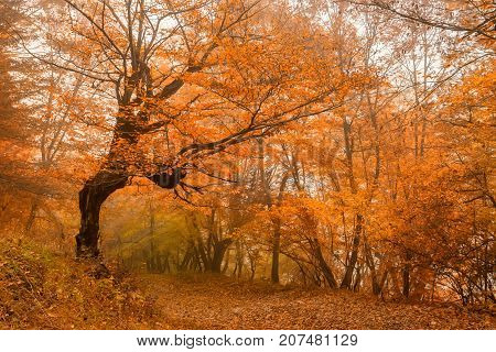 Fantasy landscape of the mysterious foggy autumn forest and lonely tree in front
