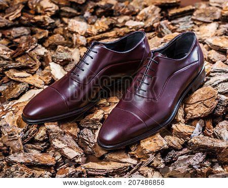 Elegant men's shoes for autumn on a background of bark