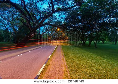 the light trail