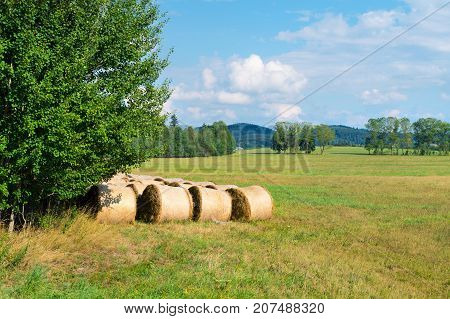 Sheaves of hay in the forest glade.