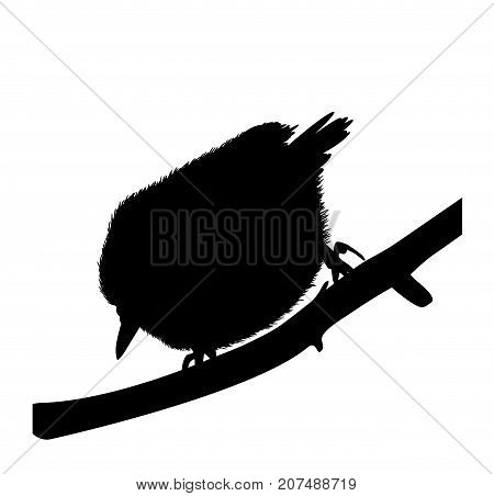 Silhouette of a bird nuthatch. There is a variant in a vector.