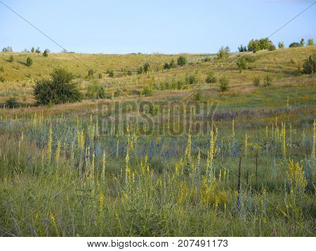 An overview of an endless heath grasslands, or steppe, landscape near Belgorod, Russia. A dry meadow is covered with many yellow, blue, and violet flowers. The sun is shining brightly over the fields. Hills and shallows, green grass, and some shrubs.