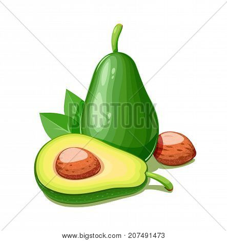 Avocado. Tropical exotic fruit. Natural organic healthy food. Isolated white background. Vector illustration.