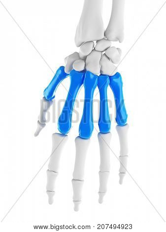3d rendered medically accurate illustration of the metacarpals
