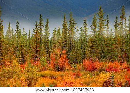 Autumn in Vermilion lakes area at Banff national park