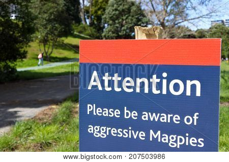 Aggressive Magpies