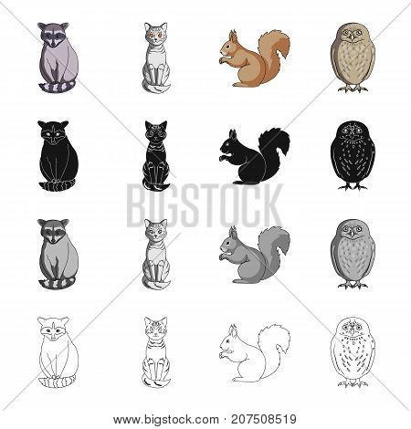 Raccoon, animal, cat, and other  icon in cartoon style.Nature, zoo, reserve icons in set collection