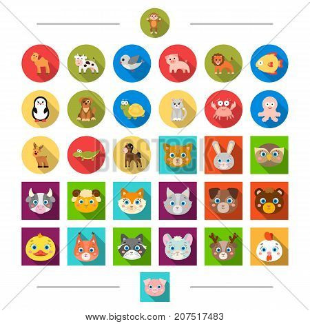 Reserve, sea, ecology and other  icon in cartoon style. Birds, nature, zoo, icons in set collection