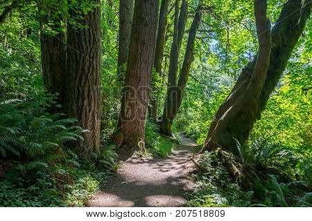Green Forest On Rim Of Silver Creek Canyon
