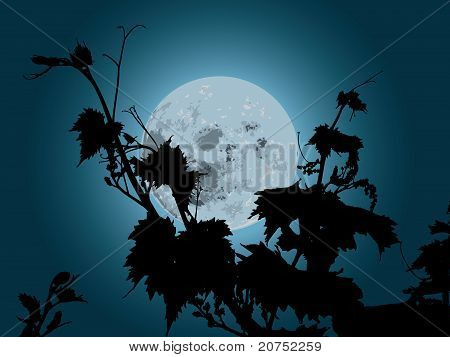 grapes plant in the moonlight