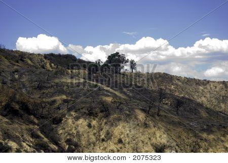 Burn Area