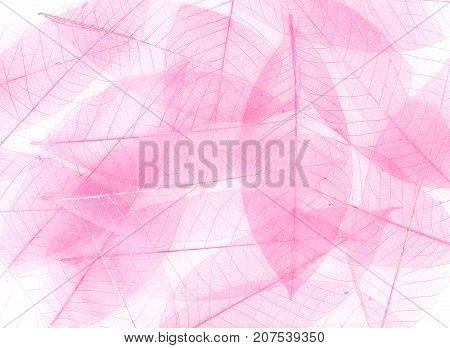 Skeleton Pink Leaves