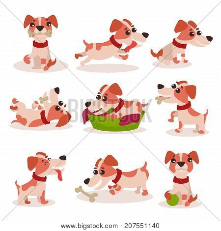 Cute jack russell terrier characters set, funny dog in different poses and situations vector Illustrations on a white background